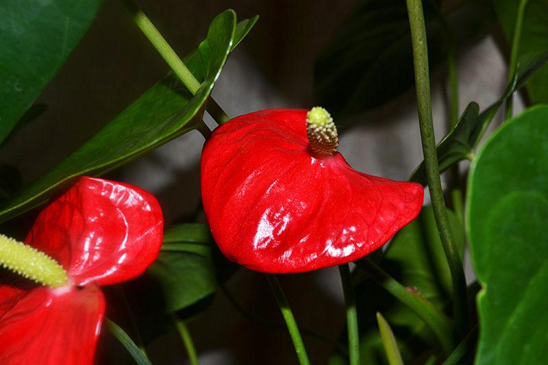 Цветок мужское начало