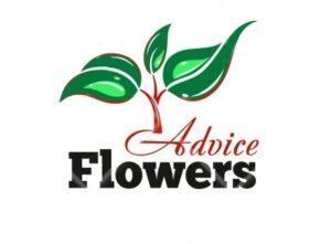 FlowersAdvice Цветочные Советы