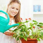 Уход и пересадка антуриума в домашних условиях