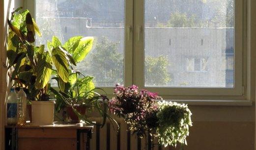 цветы на подоконнике освещает солнце