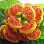 Уход за декоративными растениями