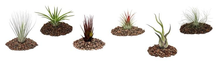Почва для разных видов тилландсии