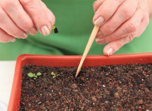 Почва для примулы