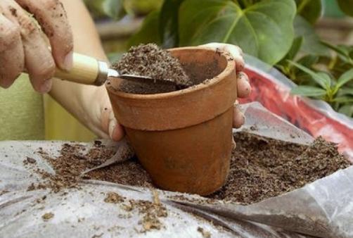 Почва для катарантуса