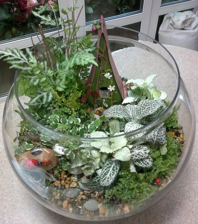 Фиттония во флорариуме