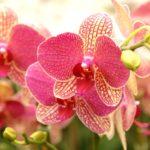 Уход за орхидеями для новичков: основные правила и рекомендации