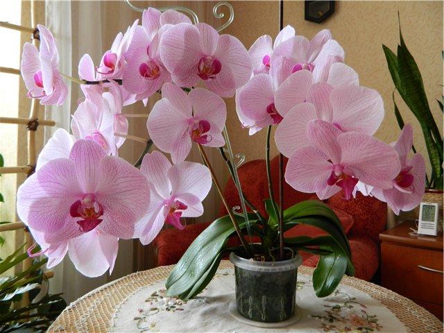 Картинки по запросу орхидеи