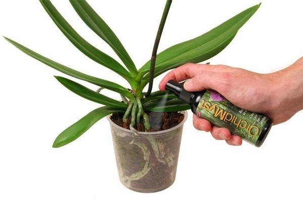 Подкормка орхидеи Дендробиум