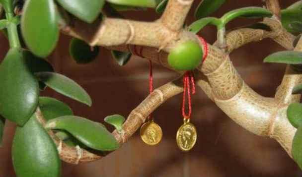 Денежное дерево примеры