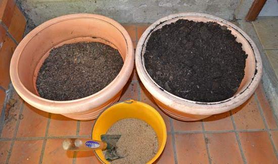 Почва для Бугенвиллии