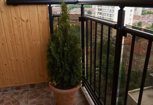 Туя комнатная на балконе
