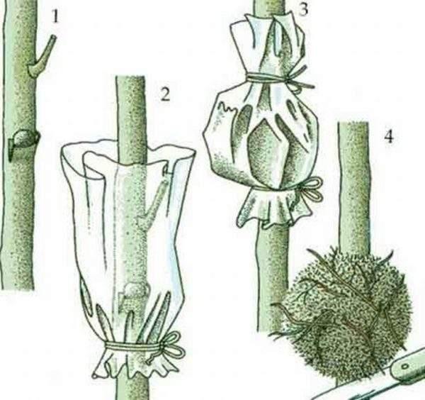 Размножение филодендрона стеблем