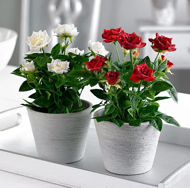 Горшок для комнатной розы