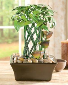 Комнатный бамбук 7