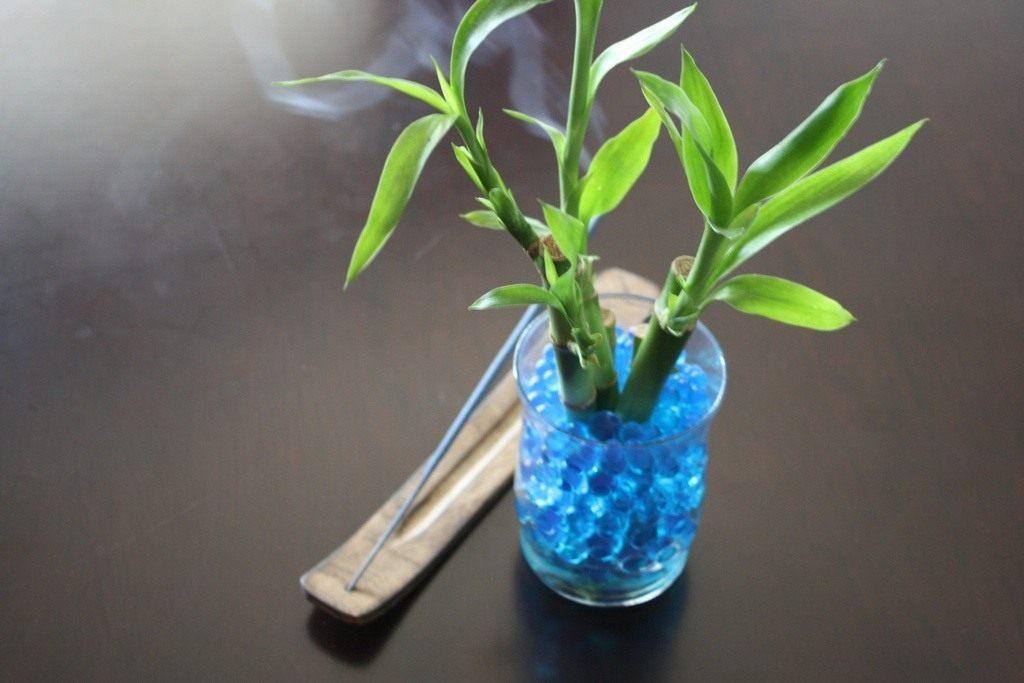 Комнатный бамбук в гидрогеле