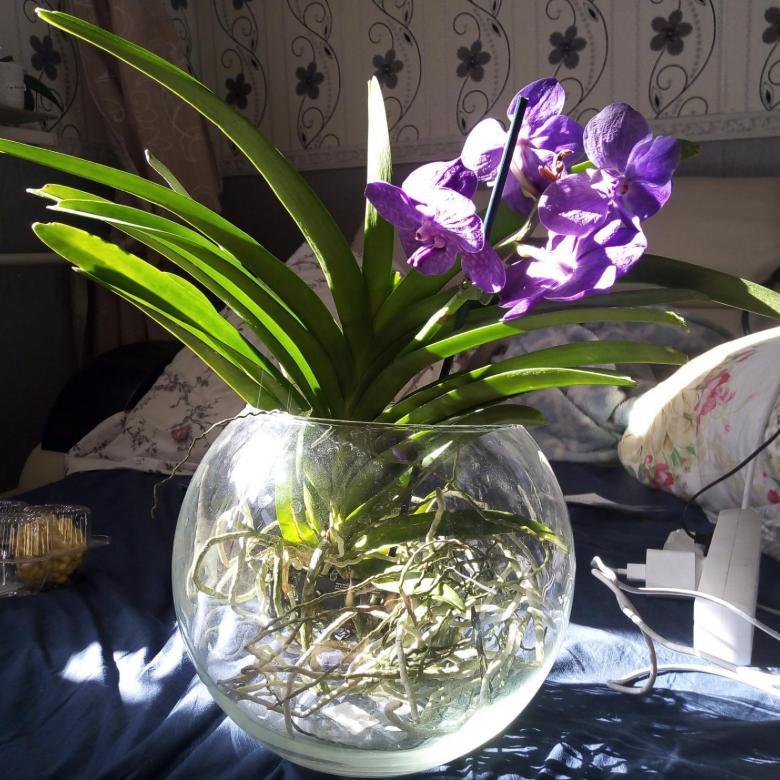 Ванда в стеклянной вазе