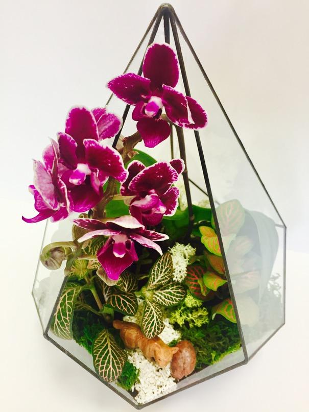 Выращивание орхидеи в флорариуме