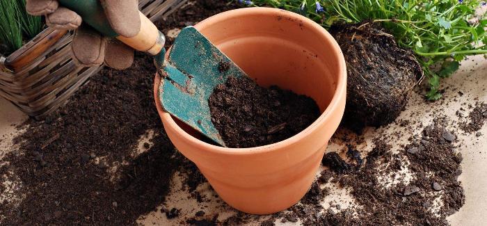 Почва для кордилины